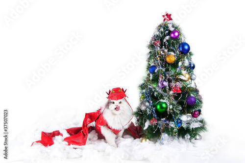 Poster cat-dragon near the tree on a white background isolated