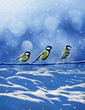 three friends birds in winter