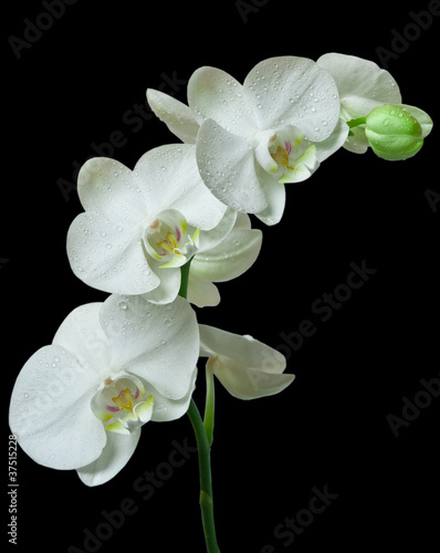 Fototapeten,orchidee,blume,makro,natur