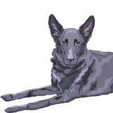 vector color sketch dog German shepherd breed