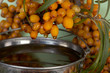 Oil of sea-buckthorn berries.