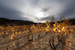 Late autumn in La Rioja vineyards (Spain)