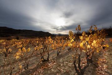 Late autumn in La Rioja vineyards (Spain)