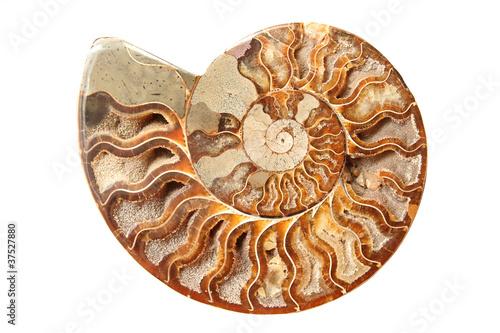 Leinwandbild Motiv Ancient ammonite