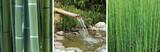triptyque sur le thème du bambou