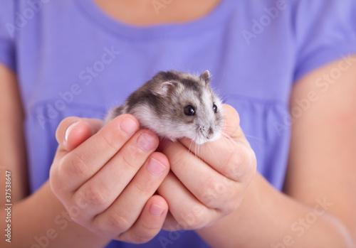 little hamster in children's hands