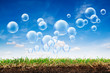Grass turf and bubbles
