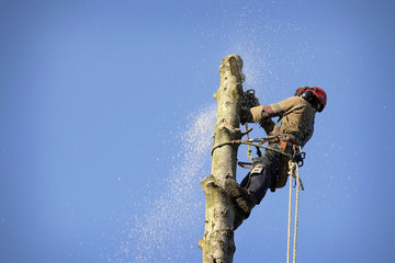 Arborist cutting tree