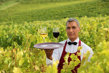 Waiter with glasses of wine on a tray in a vineyard