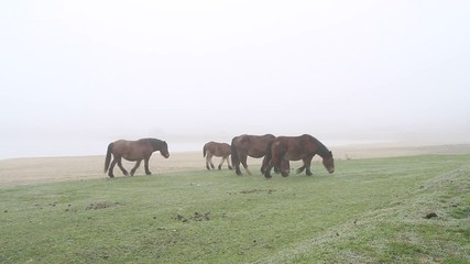 caballos en la niebla7