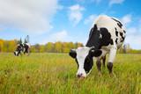 Herd - Fine Art prints