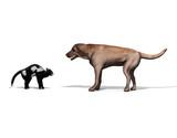 gato y perro poster