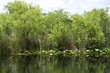 The Everglades Florida USA
