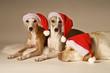 der wartende Weihnachtshunde