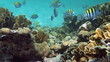 Coral reef scene with tropical fish in the Caribbean sea