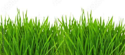 Grass border - 37582013