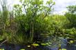 The Everglades Florida USA