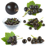 set of black currant with green leaves