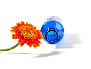 Orange gerbera flower with blue bottle on a white background