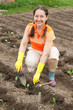 woman planting cabbage spouts