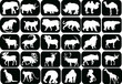collection of animals icons