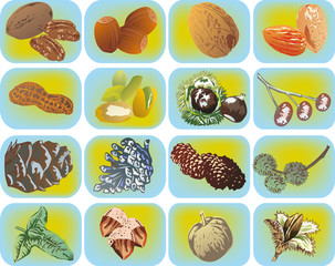set of nuts on light blue background