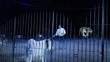 circo, una danza di tigri