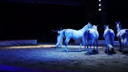 circo, ammaestratrice di cavalli