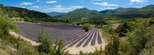 panoramique Provence - champ de lavande