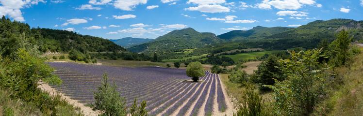 Provence - champ de lavande