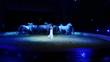 circo, lo spettacolo dei cavalli