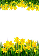 Spring flowers and grass on a white background