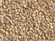 Dried pearl barley - 37661847