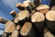 Stacked Wood Logs against sky