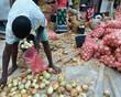 raccolto di cipolle