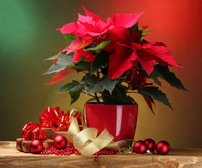 beautiful poinsettia in flowerpot, gifts and Christmas balls