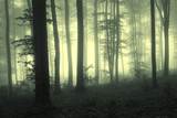 Fog in the forest with trees in counter light
