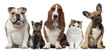 canvas print picture - Group of cats and dogs in front of white background