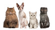 Group of cats sitting in front of white background