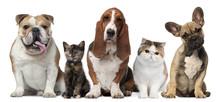 Grupa kotów i psów przed białym tle
