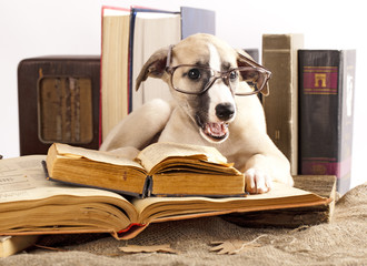 Whippet  puppy and retro book