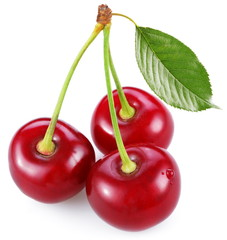 Three perfect sweet cherries with the leaf