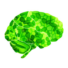 human organic brain, vector abstract background