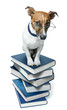 dog on book stack