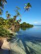 Coconuts tree shade