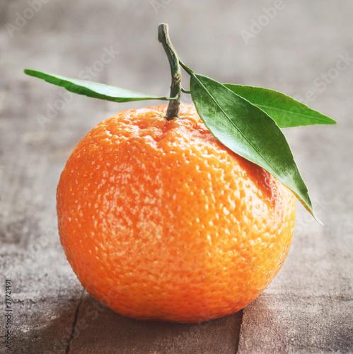 Tangerine © Barbara Pheby