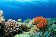 Colorful Corals on a Red Sea reef