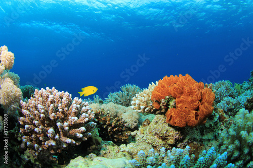 Fotobehang Koraalriffen Colorful Corals on a Red Sea reef