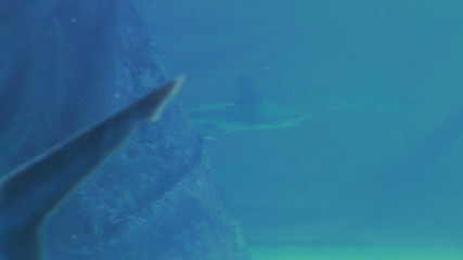 Sharks in aquarium