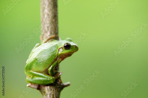 Tuinposter Kikker Frosch laubfrosch grün schön